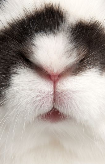 I NOSE everything because I am the Easter Bunny!!! I just wanna kiss that little nose.