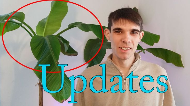 Plantele mele s au actualizat #2 / My plants have been updated #2