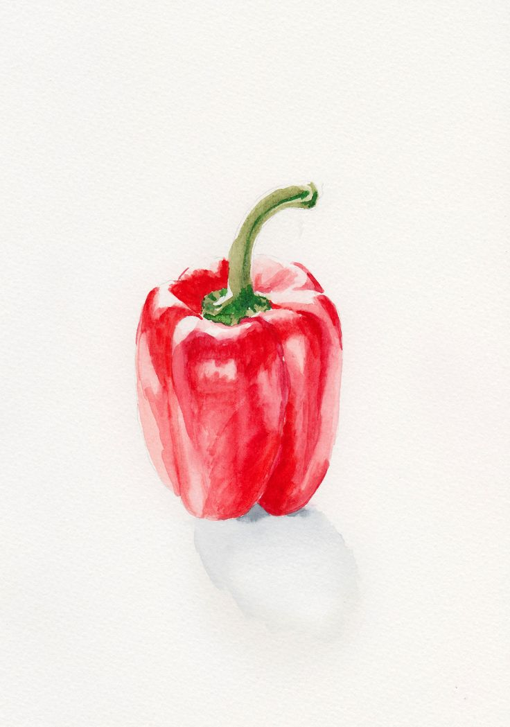 Pepper, watercolor ©lisablom