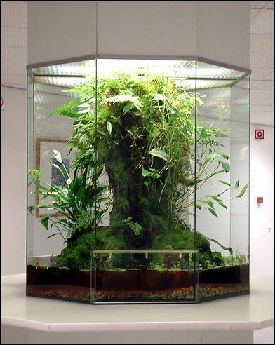 Big terrarium for a tiny jungle at home.