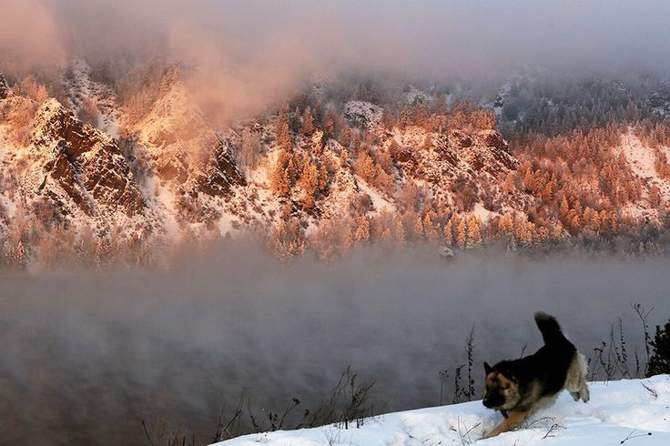 A dog runs along a bank of the Yenisei River in the Taiga district, with the air temperature at about minus 13 degrees Fahrenheit during sunset outside Krasnoyarsk, Siberia, Russia