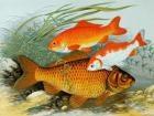 Quiz: Hvor meget ved du om fisk? | Videnskab.dk