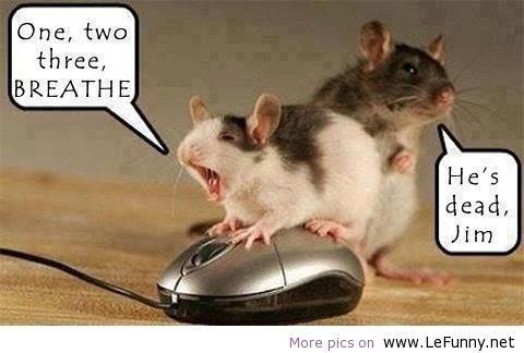 Chapter 20: Inspirational Monday!!! Funny Animal Quotes…..heehee….cuteness <3 | Miss Literati