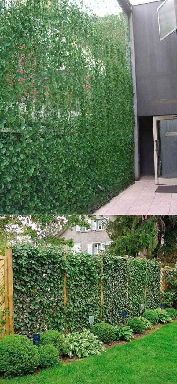 Add Privacy to Your Garden or Yard with Plants - Grow ivy on a trellis will let you have a natural privacy wall