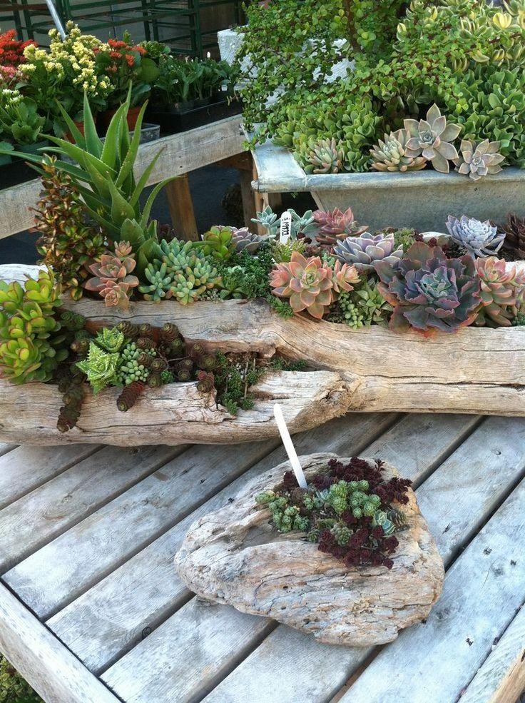 déco bois flotté et plantes succulentes avec des troncs d'arbre pour embellir la terrasse, le balcon ou le jardin moderne