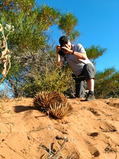 Getting the perfect shot of an elusive echidna
