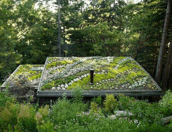 Sod roof on a modern cabin in California. | Stone Garden
