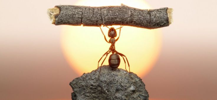 Scientists Just Put an Ant on a Treadmill (and the Business Implications Are Huge)