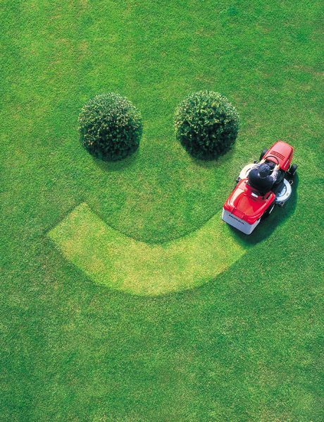 The Fun Cheap or Free Queen: GREEN Lawn Care for CHEAP! The secret of using sugar on your lawn.  Does anyone know if this works?