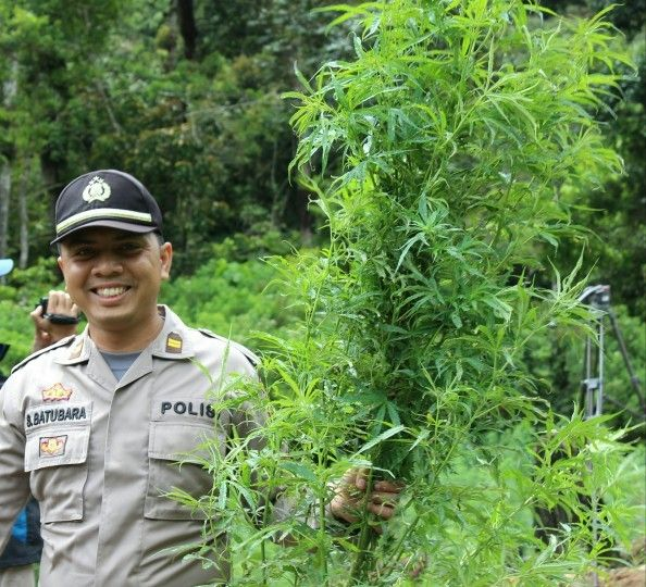 Tribratanews.com - Setelah lima hari empat malam menelusuri hutan pegunungan Blang Bike Uken dengan perjalanan kaki, Satuan Narkoba Kepolisian Re