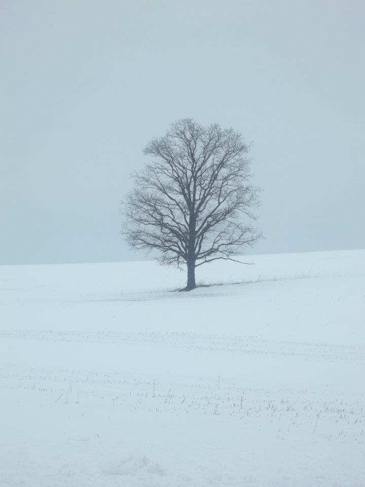 My favorite tree.