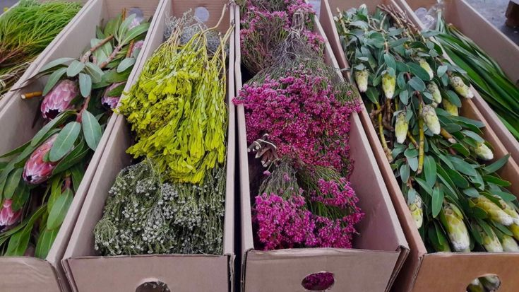 If you are anything like us, you hate to see your flowers die.   In our recent blog post, we share with you how you can make your beloved fynbos last longer.