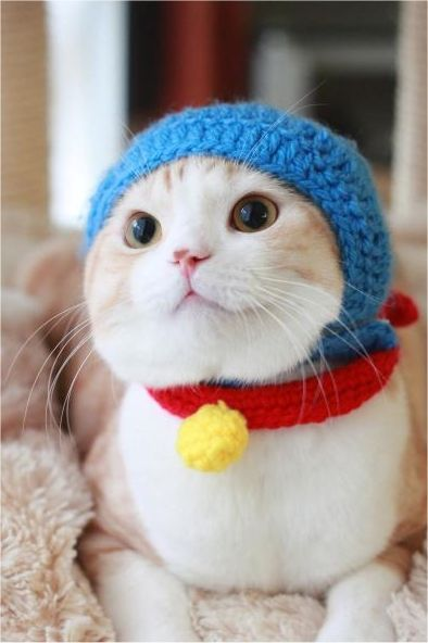adorable, awww, cats in hats, chuckle, cuddly, cuteness, funny, furry, fuzzy, haha, hats, kermit, lamb, lol, warm