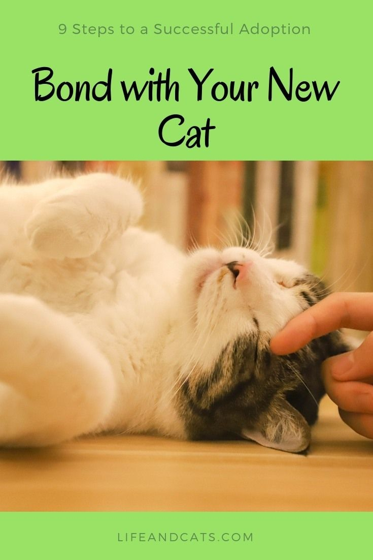 Time Patience And Understanding Creating A Bond With Your Cat Cat Training Cat Care Cat Communication