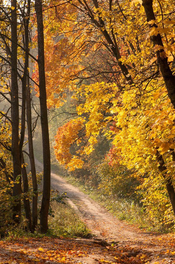 Осень автор North Wind на Яндекс.Фотках // Autumn by North Wind on Fotki.Yandex cr.af.