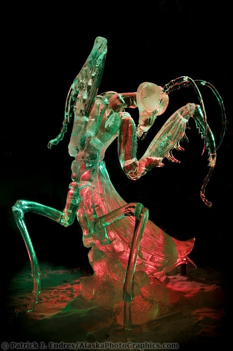 Ice carving Praying Mantis with colorful lighting: