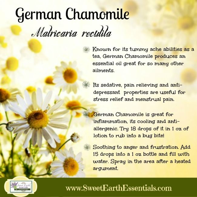 German Chamomile is not just for drinking tea. The essential oil is amazing for so many physical and emotional issues.