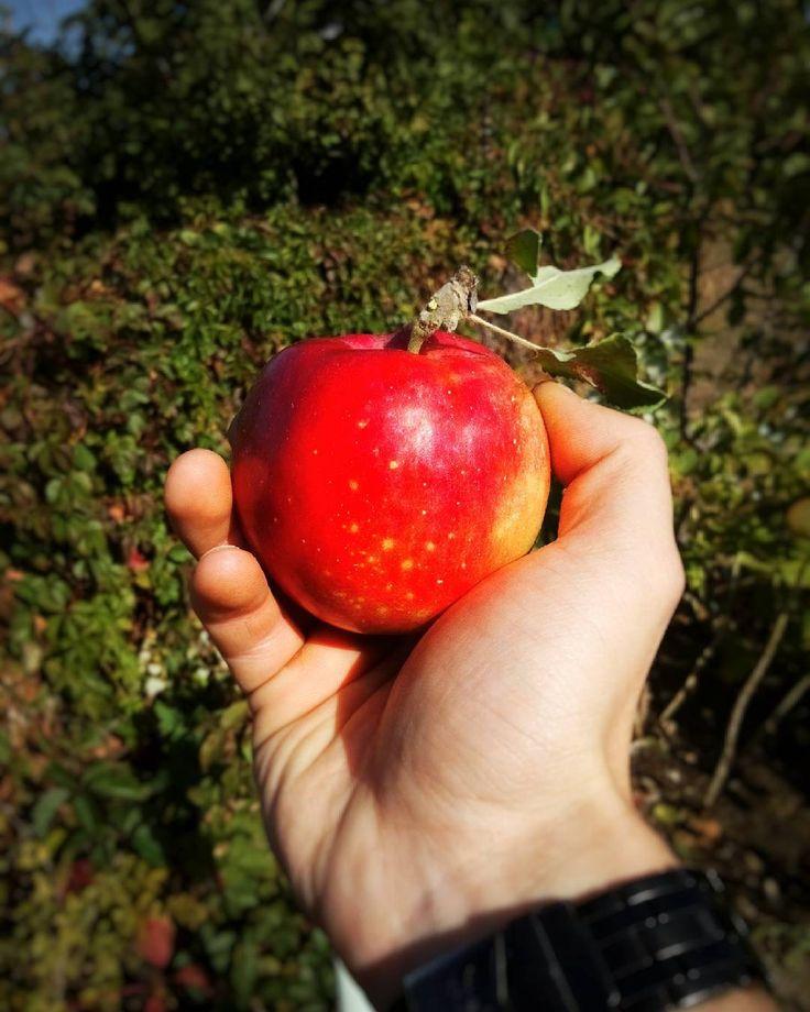 «#nature #autumn #apple #natgeo»