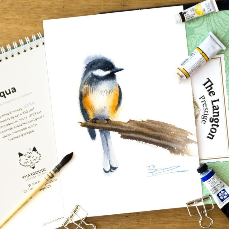 Chickadee Watercolor Paintings Watercolor Painting