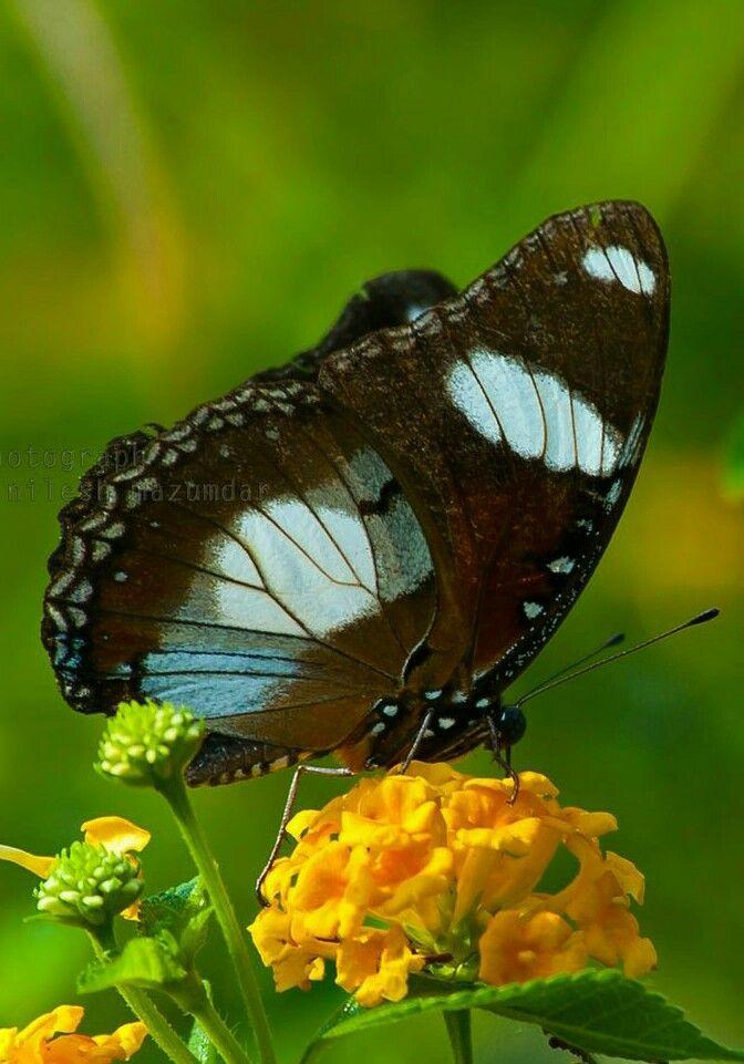 Best Pin By Billie Joy On Butterflies Butterfly Beautiful 400 x 300