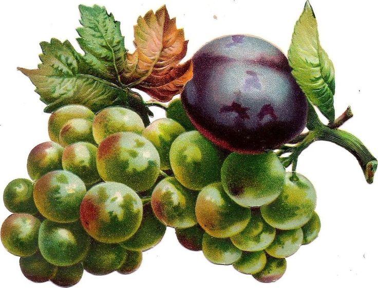 Oblaten Glanzbild scrap die cut chromo Trauben 13cm grapes Obst Frucht fruit