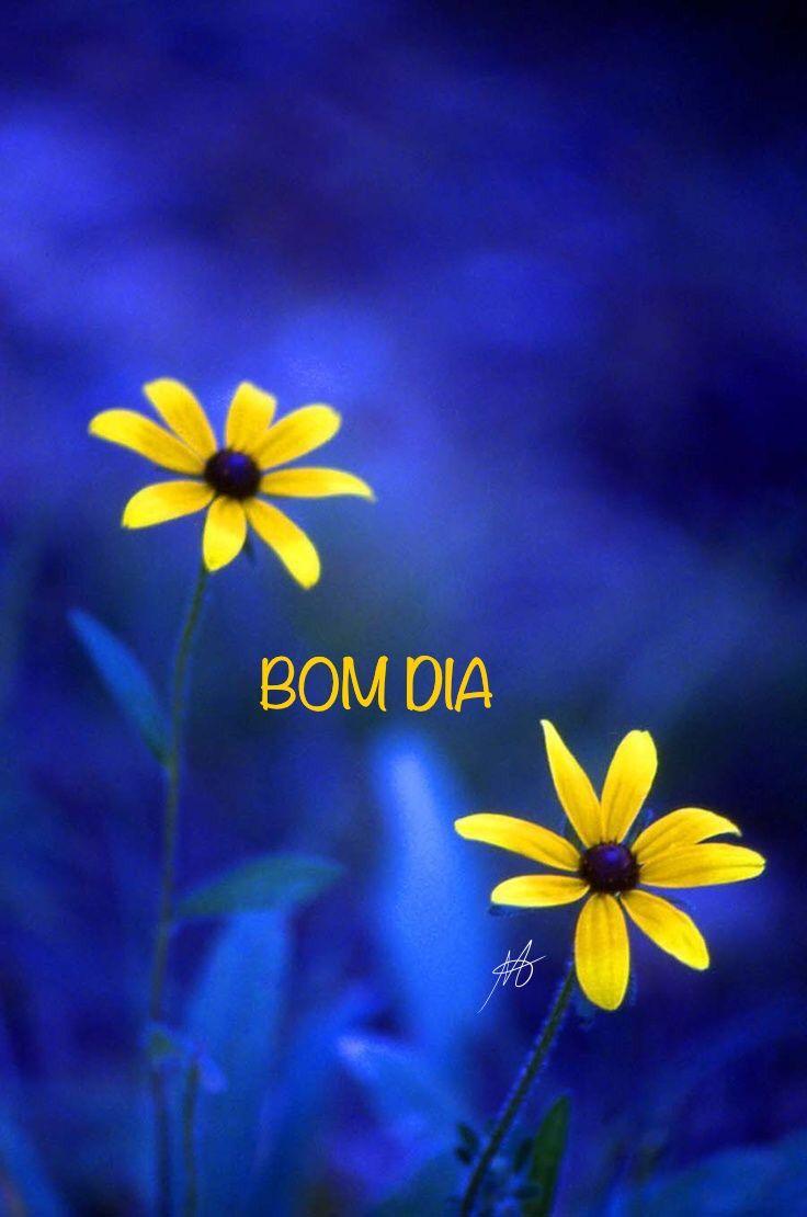 Com Cores Azuis E Flores Amarelas Esteticafrases Mensagens