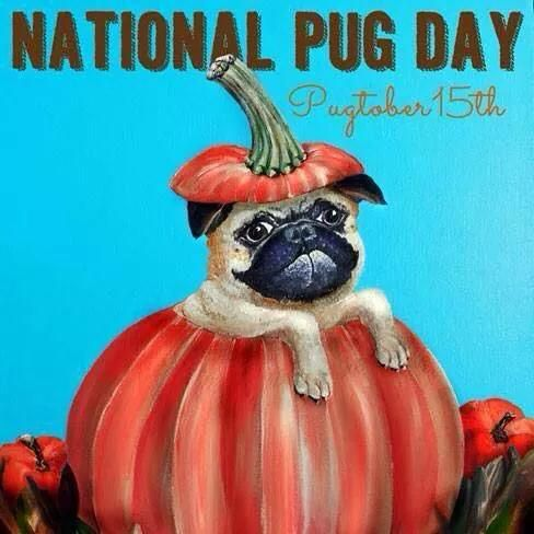 Oct 15 National pug day