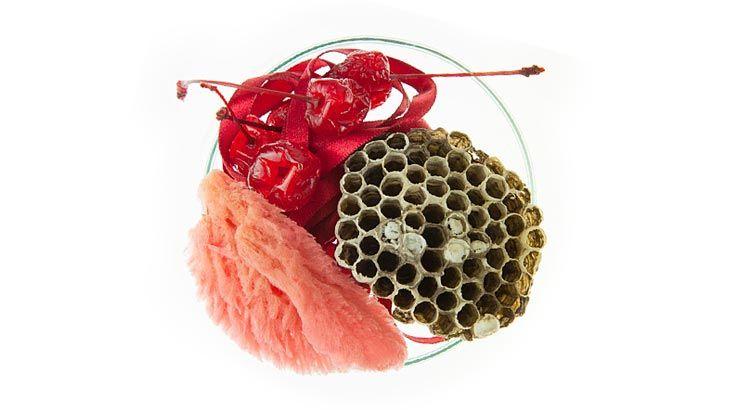 Vanitas (in a Petrie dish) - Bio Art