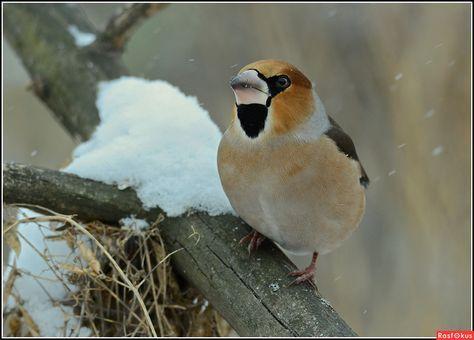 """""""Уж зима катит в глаза..."""""""