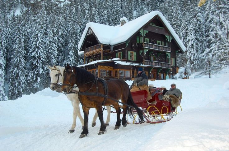 Horse drawn sleigh ride on forest trails | Spring Maple ... |Horse Drawn Sleigh Rides Christmas