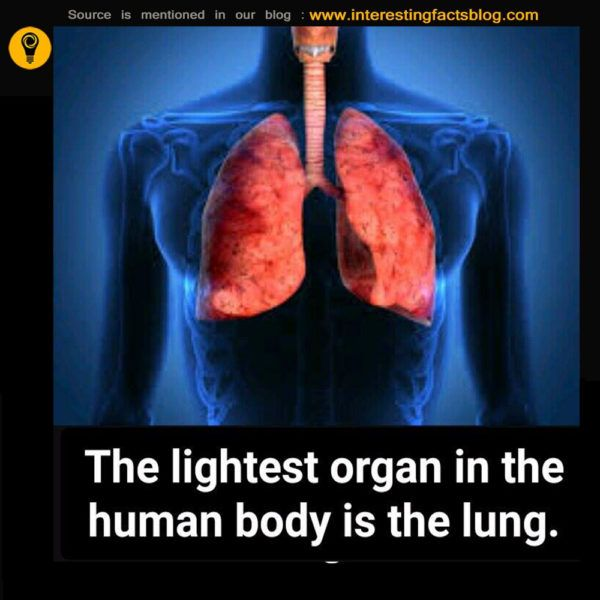 Know more information about longest part in human body, lightest human organ, heaviest body part, lightest organ, smallest organ at interestingfactsblog.com