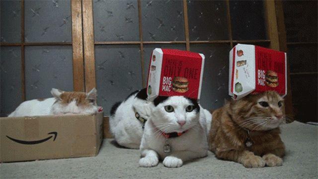 гифки картинки прикольные котики кайя биография, личная