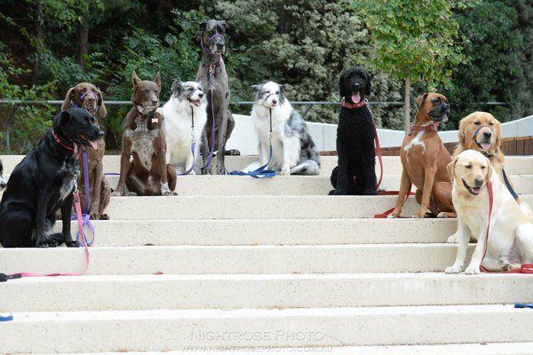 Dog Obedience School by Rebecca Tregear (@NightrosePhoto) | Twitter