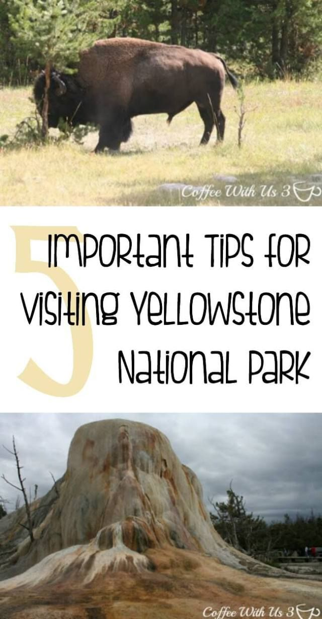 5 Important Tips for Visiting Yellowstone | Are you planning to travel to Yellowstone National Park? Make sure you know these important tips & tricks so you stay safe, enjoy your trip, and have the best vacation ever.