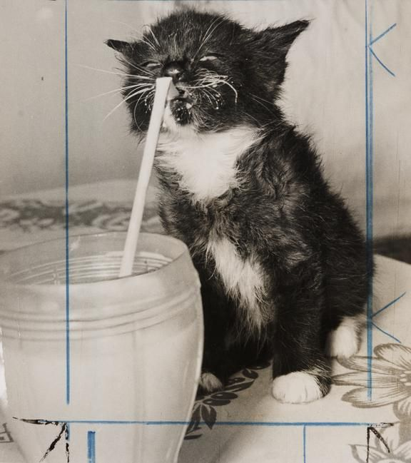 Kitten Drinking Milk Through A Straw Science Museum Group Collection Kitten Pictures Cat Drinking Drink Milk