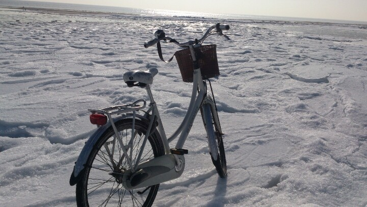 We will prevail! ... Tags: #Batavus, #Diva, #Bicycle, #Bike, #small #adventure, #ice, #beach