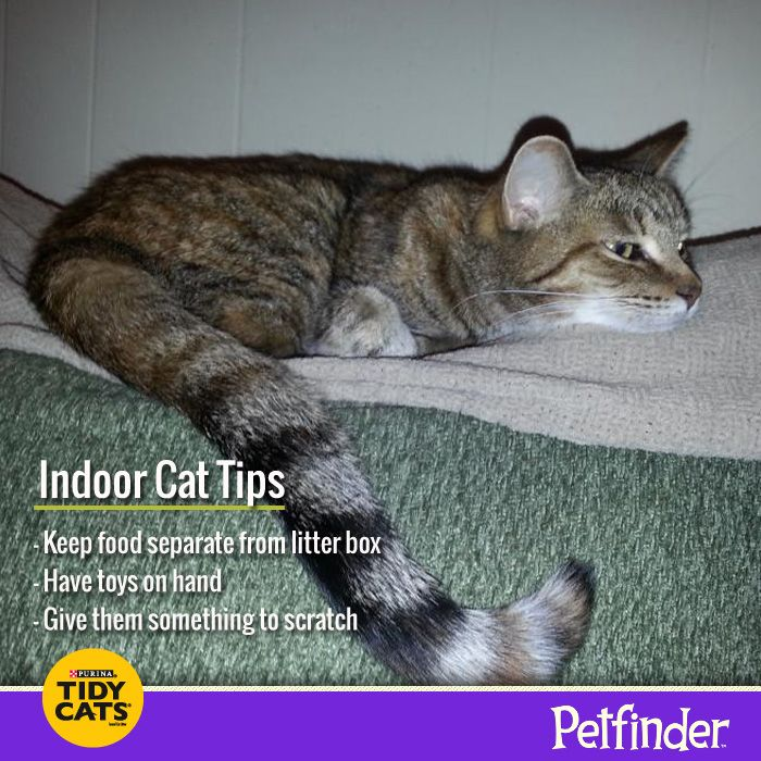 a look at challenges in taking care of pets At your service pet grooming and care,  • provide absolute care for the pets  thank you to the team and especially jen for taking such good care of zoey.