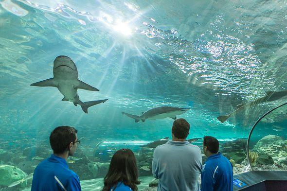 The Toronto Aquarium