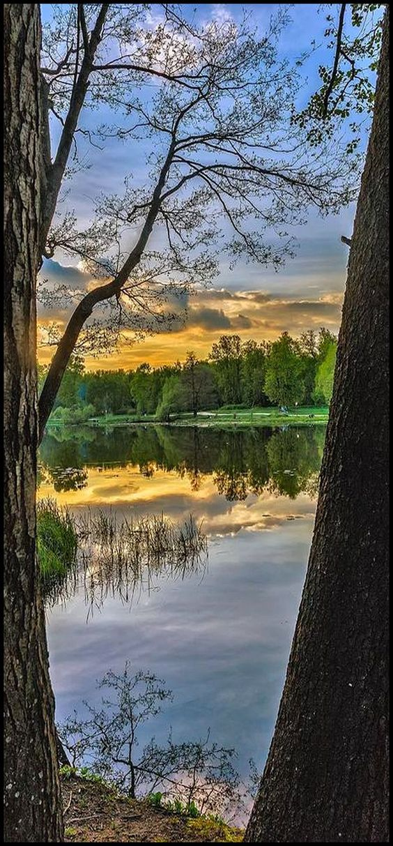AMAZING SUNSET #photo by Igor Torgman on plus.google.com #landscape nature water reflection tree sky clouds tree
