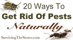 20 Ways To Get Rid Of Pests Without Harsh Chemicals - ants, spiders, fruit flies, mosquitos, bugs in the garden, wasps, & more!