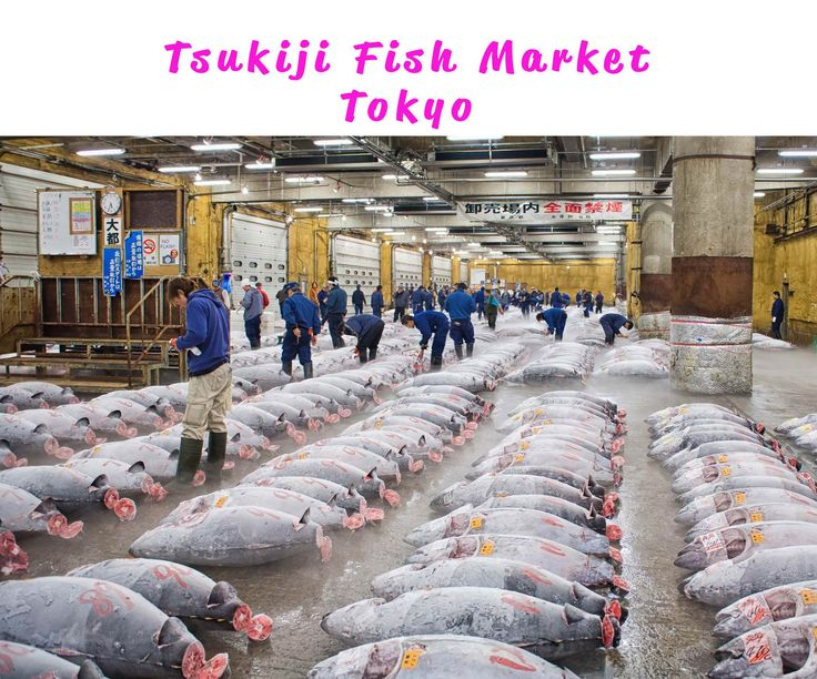 """Tsukiji Market (築地市場, Tsukiji Shijō) is a large wholesale market for fish, fruits and vegetables in central Tokyo. It is the most famous of over ten wholesale markets that handle the distribution of food and flowers in Tokyo. Tsukiji Market is best known as one of the world's largest fish markets, handling over 2,000 tons of marine products per day. If you watch the Nat. Geo. reality TV show """"Wicked Tuna"""", most likely the tuna that are caught are airlifted to Tokyo within a few hours and end…"""