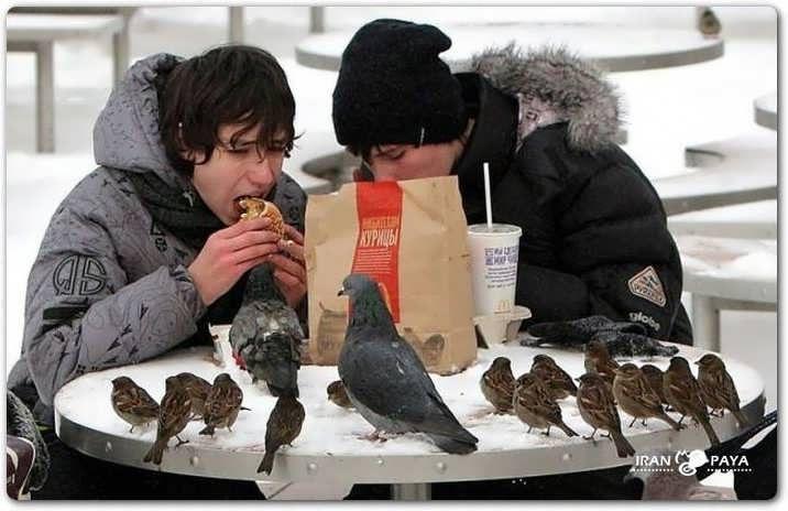 ptáci a jídlo