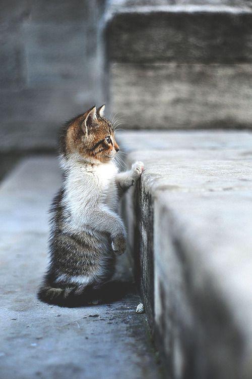 cat, animal, and kitty kép