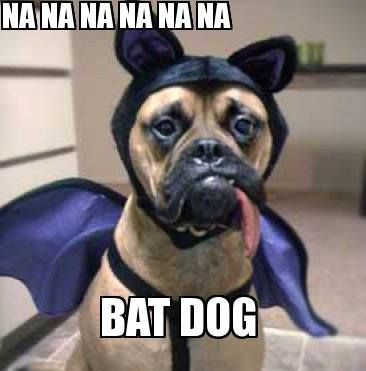 Bat dog! At Orchard Lake Pet Resort we strive to provide the best overnight care and grooming services for our canine clients! Call (248) 372-7000 or visit our website www.orchardlakepe... for more information about the services we provide!