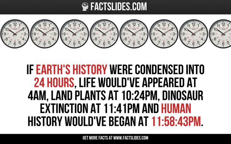 If Earth's history were condensed into 24 hours, life would've appeared at 4am, land plants at 10:24pm, dinosaur extinction at 11:41pm and human history would've begun at 11:58:43pm.