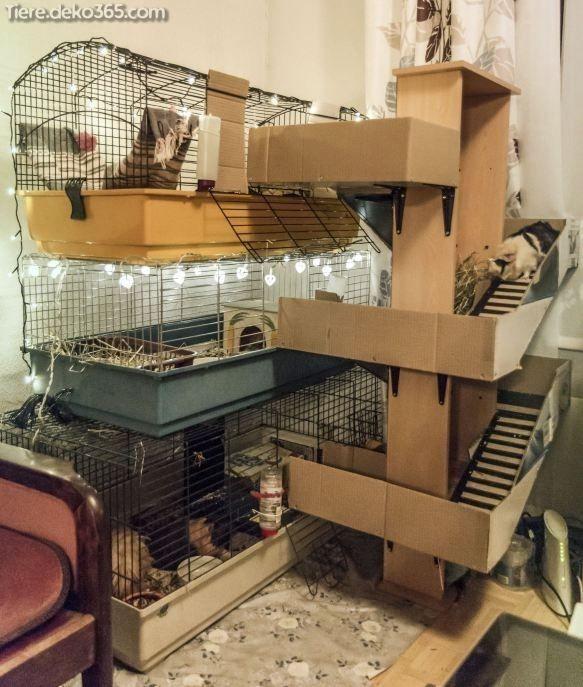 Dasjenige Beste Hamsterhaus Dasjenige Sie Jetzt Erstellen Konnen Meerschweinchen Hamsterhaus Und Hamster