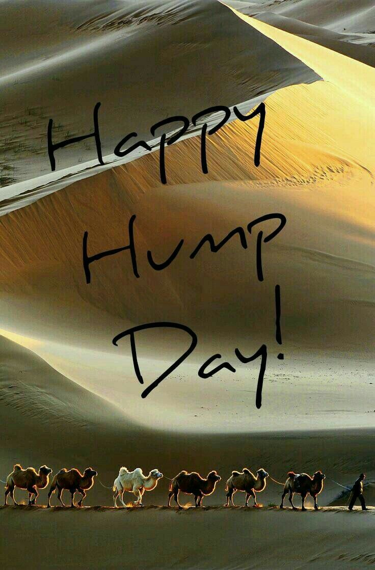 Happy Hump Day Image With Camels Wednesday Hump Day Humpday Hump Day Camel  Wednesday Quotes Happy Wednesday Wednesday Quote Happy Wednesday Quotes  Hump Day ...