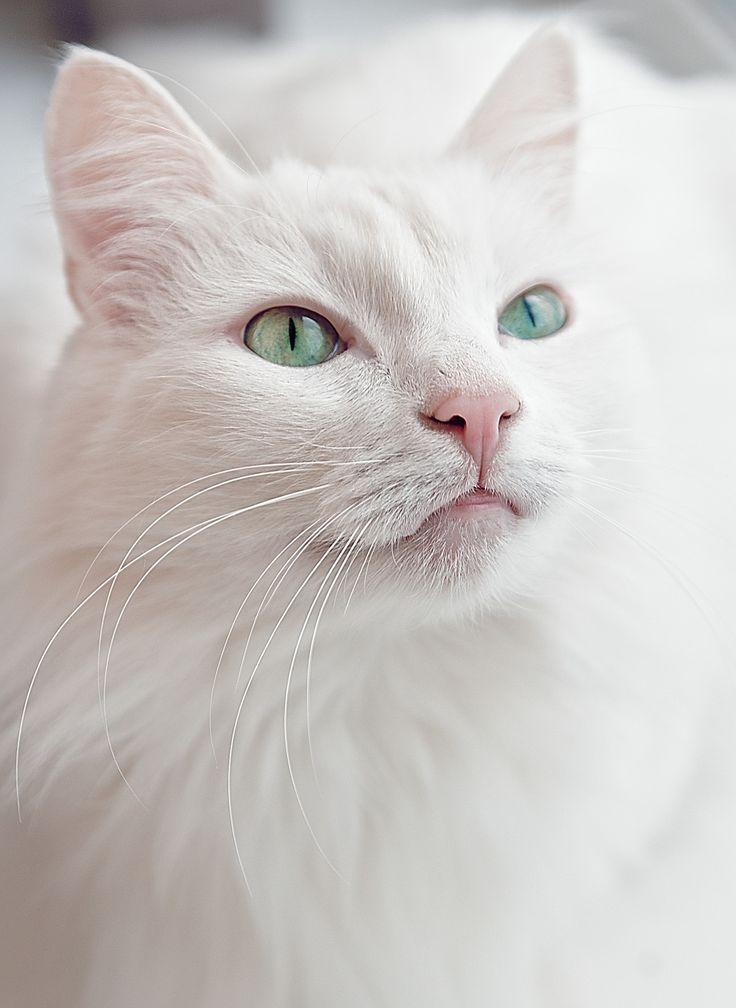 White cat - null