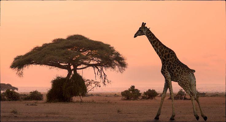 35PHOTO - Andre Victor - Африканский закат