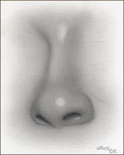 Female Nose Pencil Drawing Tutorial Step 6